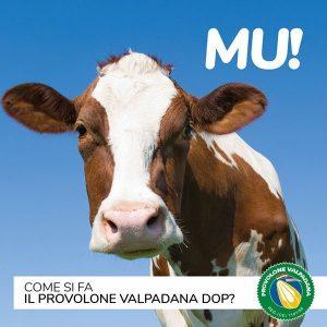 Provolone Valpadana DOP mucca per latte